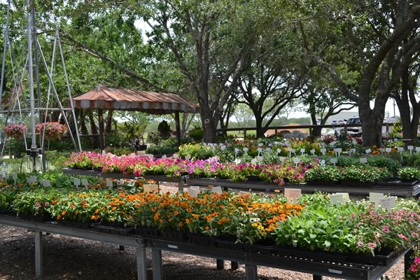 We offer Nursey & Landscaping Services throughout South Texas.